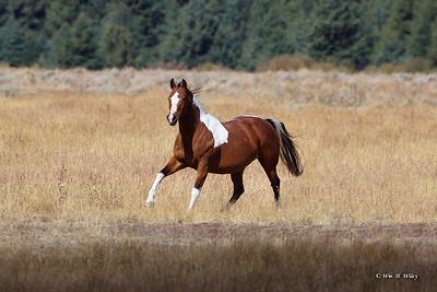 Teton Horse