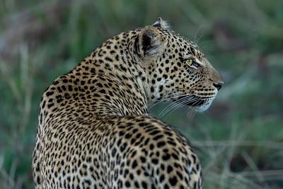 Beauty - Serengeti 2021
