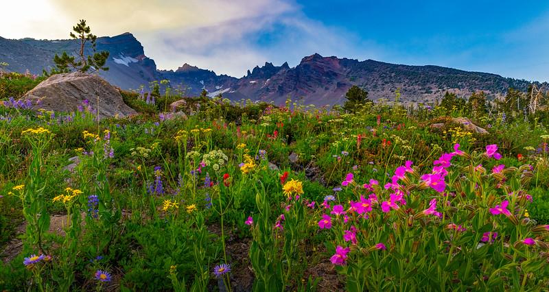 Wildflowers on Broken Top