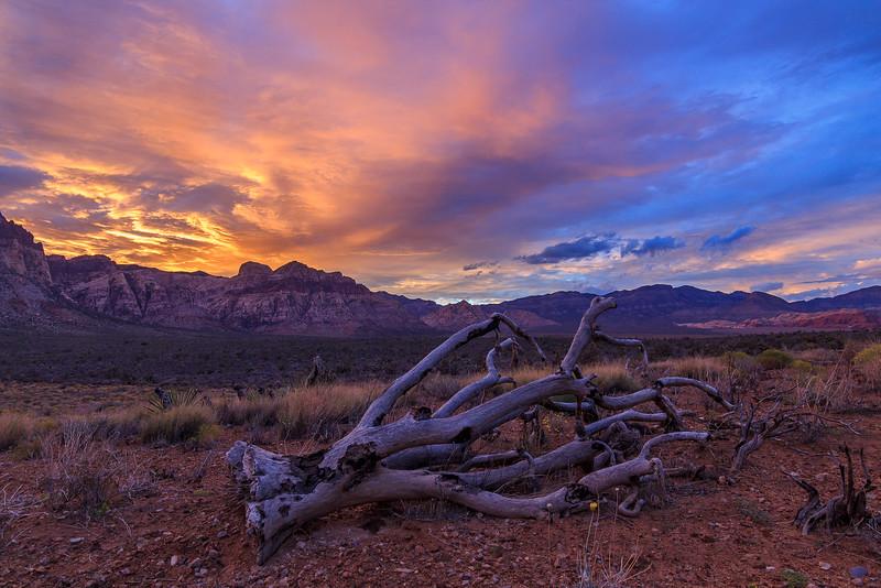 Desert's Colors