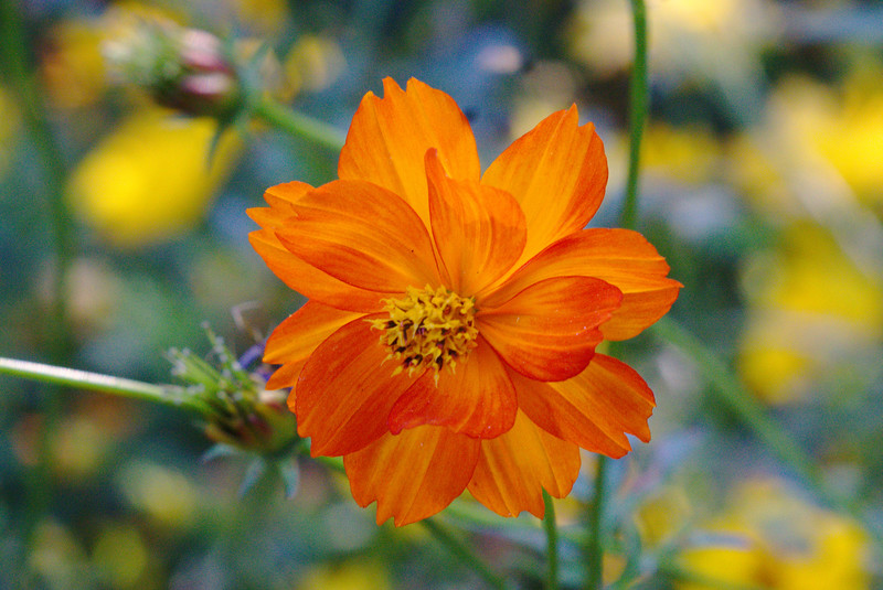 Orange petal perfection