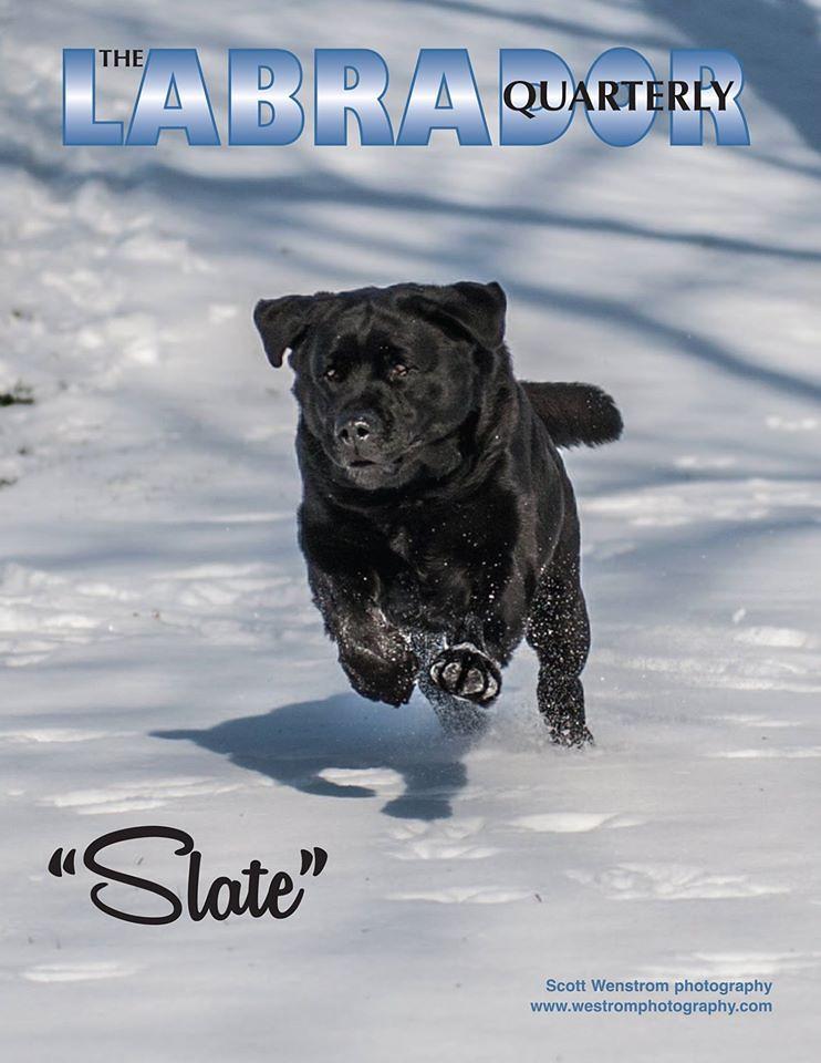Labrador Quarterly Magazine