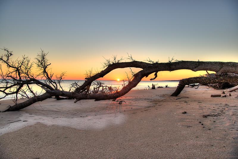 Driftwood Sunrise, Amelia Island, FL