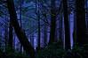 Rainforest Night Magic
