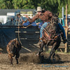 Sedro Woolley Rodeo, steer roping