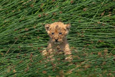 Little one - Serengeti 2021