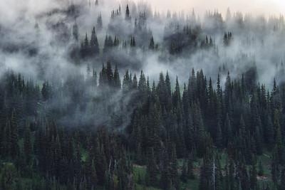 Foggy Sunrise at Mt. Rainier National Park