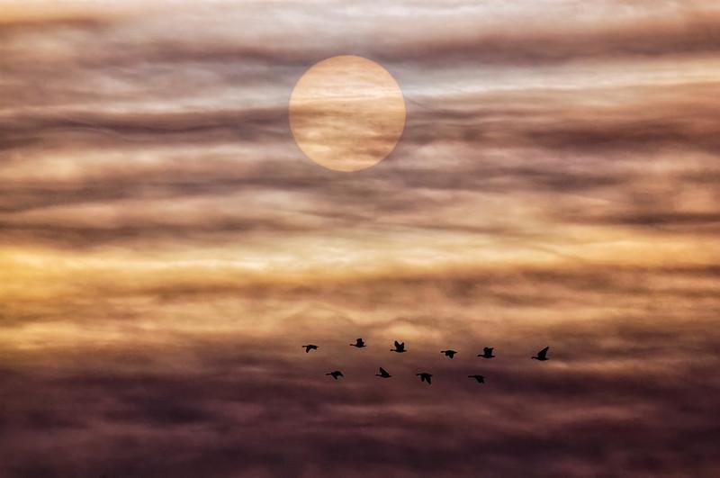 Solar Migration