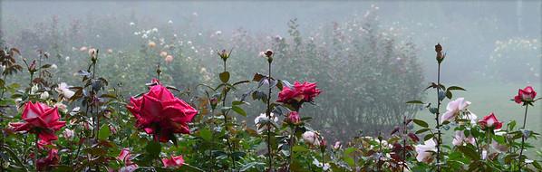 Raleigh Rose Garden, 2012