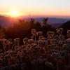 Beautiful Sunrise along Sunrise Highway