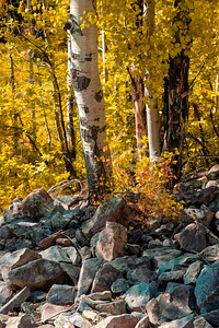 Aspens on Keebler Pass Colorado