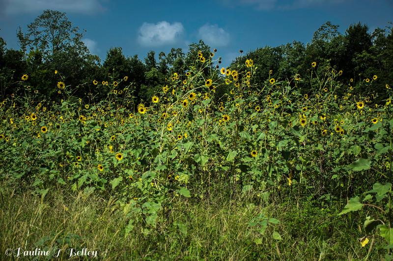 DSC_0237 Flowers