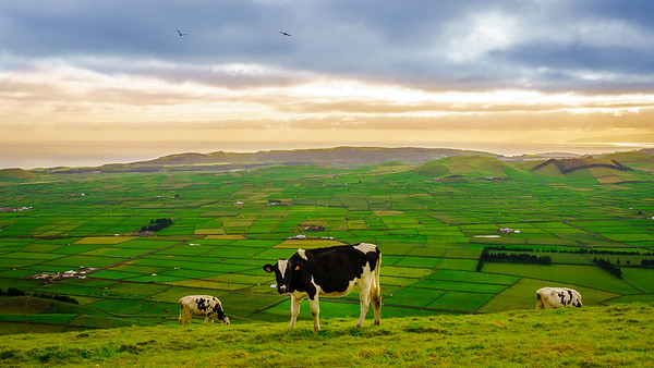 Original Terceira Island Top Viewpoint Landscape Photography By Messagez com