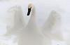 Trumpeter Swan - #0780