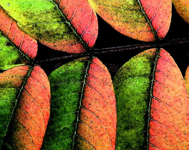 Sumac leaves