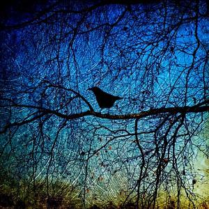 crow waiting, pacific northwest