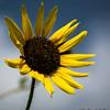 DSC_0221 Flower