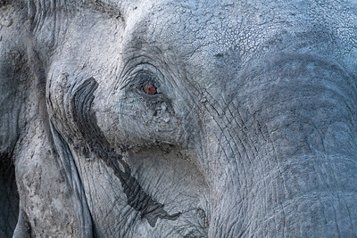 Insight - Okavango Delta, Botswana, 2019