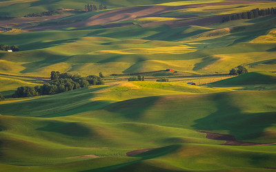 Summer at Palouse
