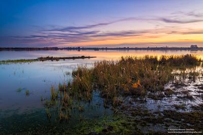 La marisma / The marsh