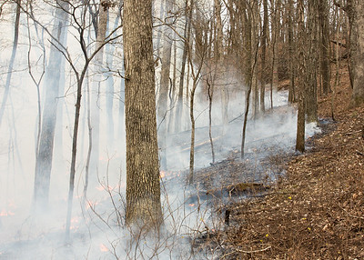 Prescribed fire, Species-Pool Functional Diversity & Fire Experiment, Tyson Research Center, Missouri