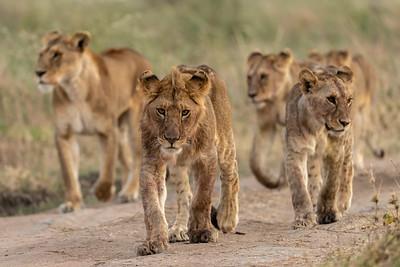 Eye to eye - Serengeti 2021