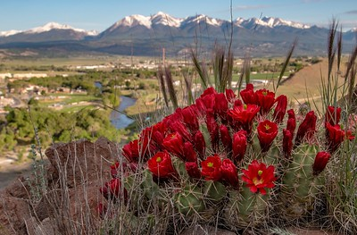 """ S "" Mountain Bloom. Salida, Co"