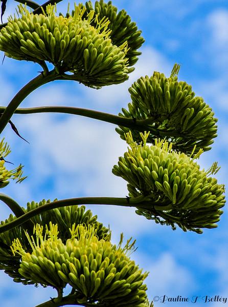 DSC_0680 Tall Flowers