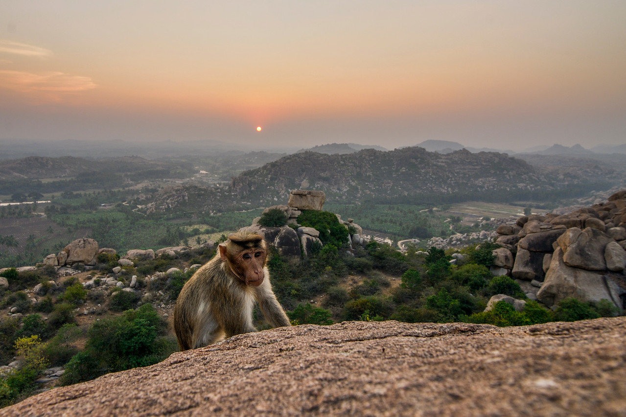 Sunset with the macaque