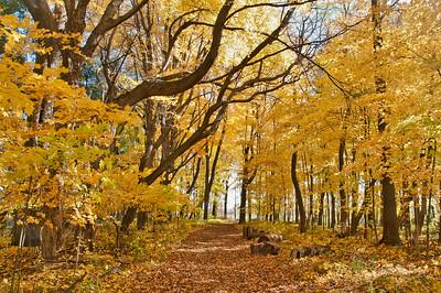 Maple Walk
