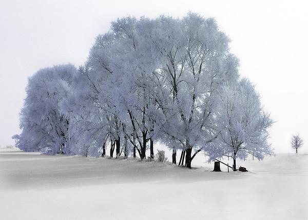 Hoar frost, Minnesota, #0057