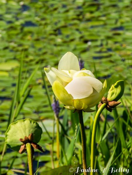 DSC_0028 Flowers