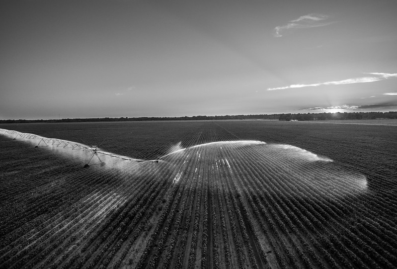 Cotton Pivot Sunset (BW)
