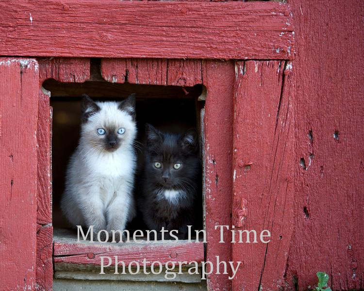 Two kittens in door