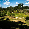 Imaharas Garden 5 Post