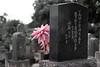 Japanese cemetery, Kona Coast, BIg Island, Hawaii