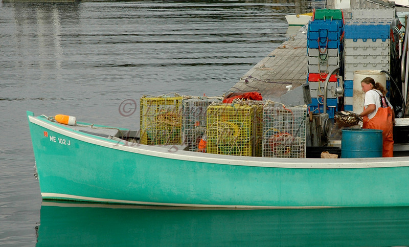 Baiting lobster traps in New Harbor, Maine