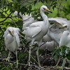 DSC_0915 Egret
