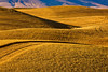 Hills of the grain in the the Palouse region of Washington