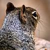 Squirrel-005