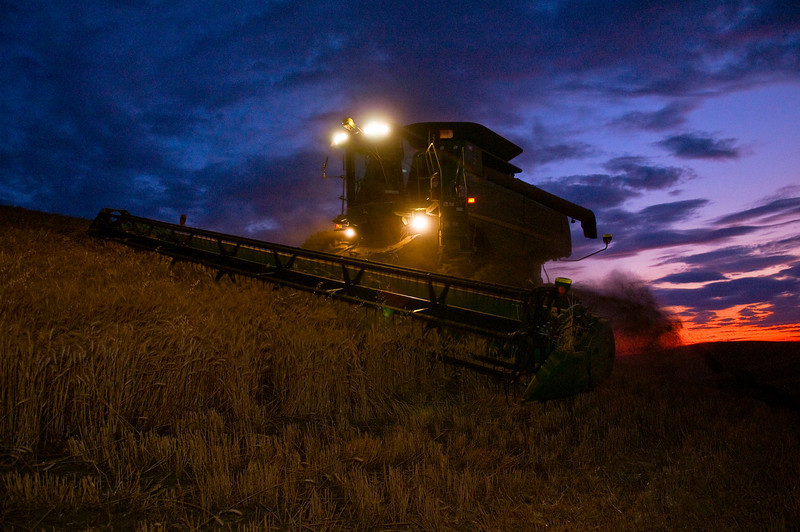 Harvesting wheat at twilight in the Palouse region of Washington