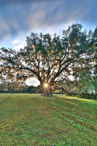 Cellon Oak, FL