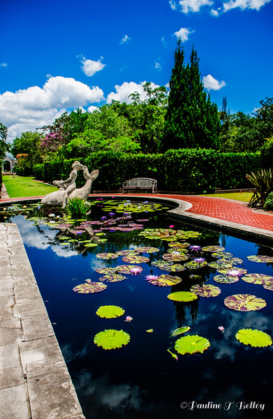DSC_0395 Water Garden