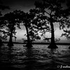 Lake Fausse Cypress Post