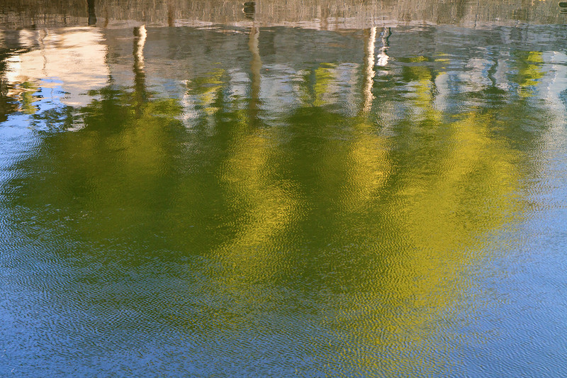Plane trees along the Seine reflected in the river
