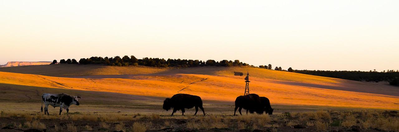 Zion Mountain Ranch Hills
