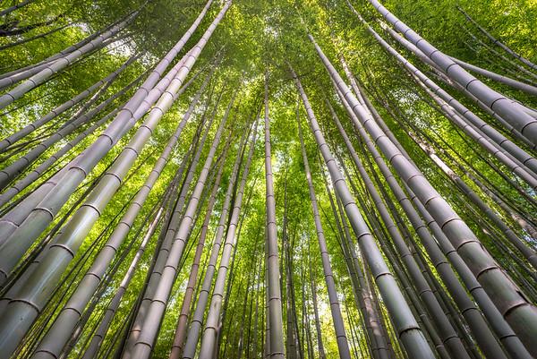 Bamboo Vertigo