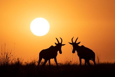 Stand your ground - Serengeti 2021