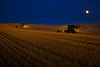 A pair of combines harvest wheat in the Palouse region of Washington by the light of the moon in early evening