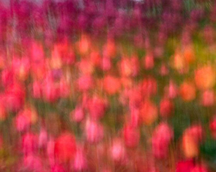 Abstract Tulips
